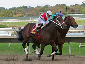 Pashito The Che wins the 2009 Gallant Bob.