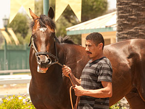 Paynter Schooling at Hollywood Park, June 13, 2013.
