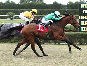 Philly Ace wins the 2012 Tropical Turf Handicap.