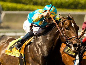 Injury Ends career of Pioneerof the Nile