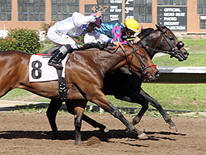 Plea Agreement wins the 2014 Budweiser Special Stakes.