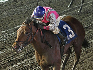 Polar Plunge wins the 2013 Lady Slipper Stakes.