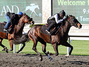 Politicallycorrect works at Keeneland, April 7, 2012.