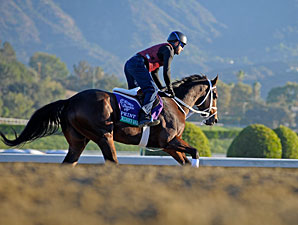 Poseidon's Warrior - Breeders' Cup 2012