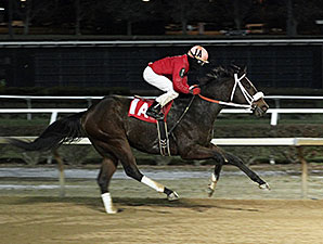 Present Course mile allowance Mountaineer, new track record, 11/19/2014.