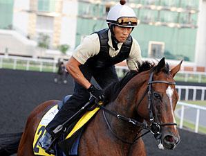 Presvis - Dubai 2012