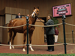 Princess Arabella at the Keeneland January Sale.