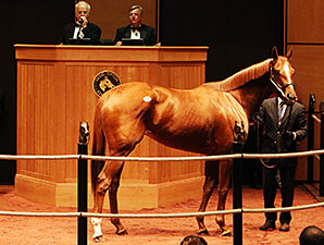 Princess of Sylmar at the Fasig-Tipton November Sale.