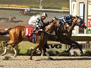 Private Zone wins the Pirate's Bounty Stakes.