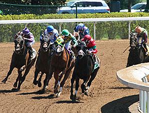 Prontico wins the Ben Ali Stakes.