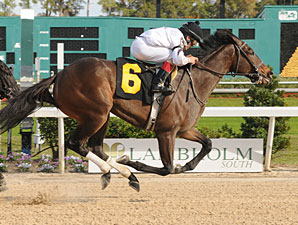 Purple Egg wins the 2012 Inaugural Stakes.