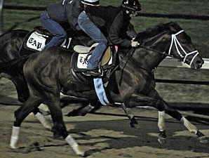 Quality Road working towards the Breeders' Cup.