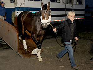 Queen'splatekitten arrives at Woodbine on June 24, 2011.