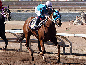 Raider Red wins the 2014 Copper Top Futurity Trail Colts & Geldings 1st Division.