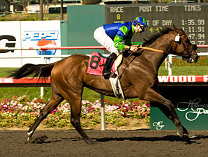 Rail Trip wins the 2009 Hollywood Gold Cup.