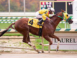 Rapid Redux wins 19th in a row, 10/27/11 at Laurel.