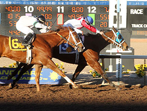 Reaper wins the 2014 Pepsi Cola Stakes.