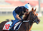 Dubai World Cup: March 28 Morning Training II