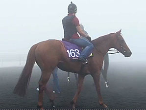 Red Dubawi (IRE) preps for the Dubai World Cup at Meydan 3/6/2014.