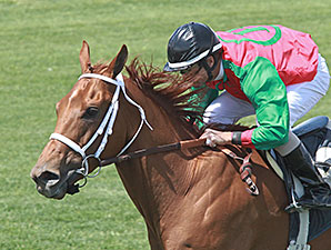 Red Zeus wins the 2014 Dwight D Patterson Handicap.