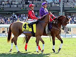 Reneesgotzip in the 2013 Breeders Cup Turf Sprint post parade.