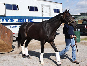 Revolutionary arrives at Churchill Downs on April 12.