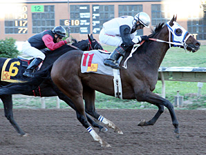 Rey Del Mar wins the 2013 New Mexico State Fair Breeders' Stake.