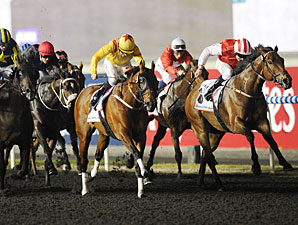 Reynaldothewizard wins the 2013 Dubai Golden Shaheen.