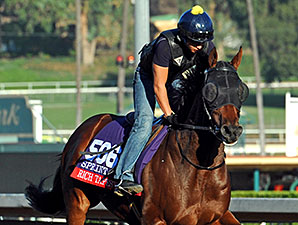 Rich Tapestry - Breeders' Cup 2014.