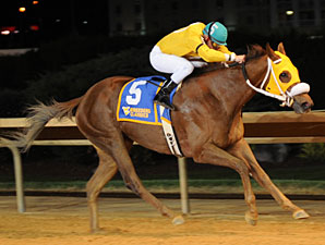 Rita Haywood wins the 2012 West Virginia Division of Tourism Breeders' Classic.