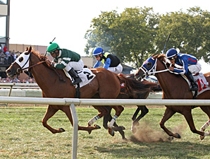 Roadhog wins the 2013 Alphabet Soup Stakes.