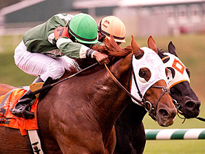 Roadhog wins the 2013 Maryland Million Turf Stakes.