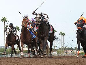 Rockin Home wins the 2014 Cactus Wren Stakes.