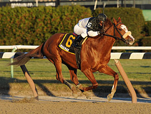 Rodman wins the 2009 Queens County.