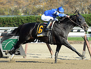 Romansh wins the 2013 Discovery Handicap.