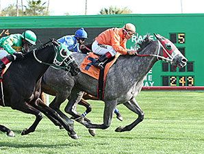 Ronda Rocks wins the 2014 Sun City Handicap.