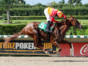 Rose to Gold wins the 2012 Brave Raj.