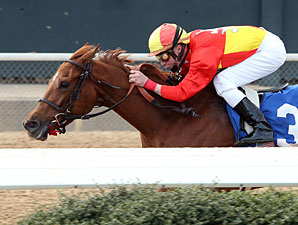 Rose to Gold wins the 2013 Honeybee Stakes.