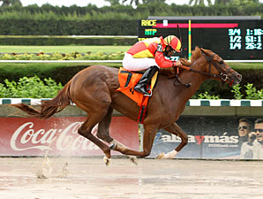 Rose to Gold wins the 2012 Lindsay Frolic.