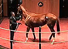 Fasig-Tipton Kentucky Winter Mixed Sale 2015 Wrap