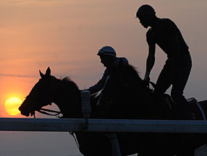 Roxy Gap in the morning at the track, prepping for the Woodbine Oaks.