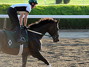 Royal Delta on Belmont's Track 6/2/2013.
