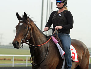 Royal Delta at Meydan Racecourse.