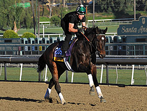 Royal Delta - 2013 Breeders' Cup, October 30, 2013.