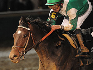 Royal Delta wins the 2011 Breeders' Cup Ladies' Classic.
