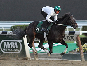 Royal Delta - Belmont Park Work, October 26, 2013.