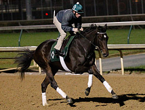 Royal Delta at Churchill Downs, October 28, 2011.
