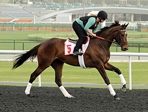 Royal Delta in Dubai.