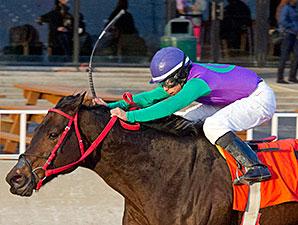 Royal Posh wins the 2014 Powerless Handicap.