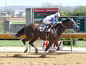 Russell Road wins the 2015 Confucius Say Stakes.
